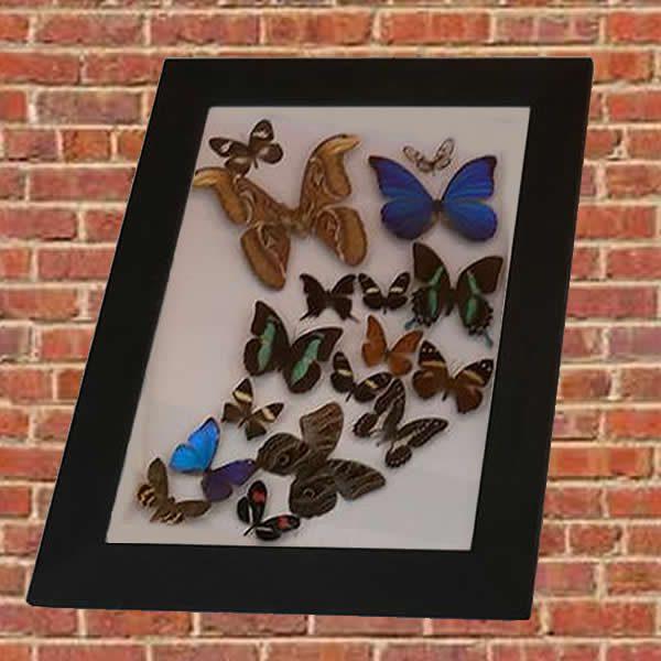 cuadro con mariposas disecadas