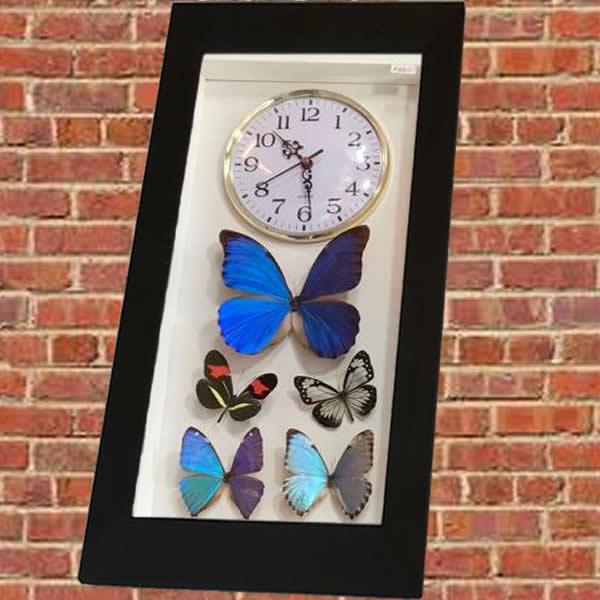 cuadro reloj de mariposa