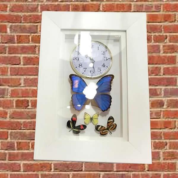 reloj de pared con mariposas disecadas